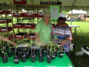 Club president Claudette Hammond and treasurer Jo-Marie McBean discuss the varieties of tomatoes
