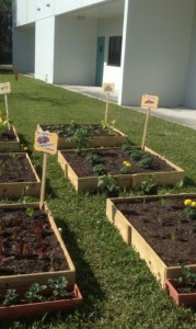 Vegetable Garden at Peters Elementary